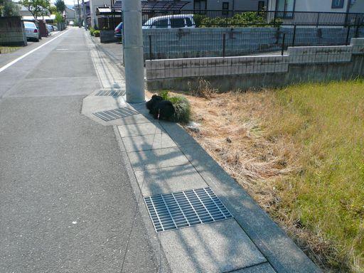 TAIZO20080427_1.jpg