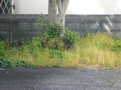 TAIZO20080525.jpg