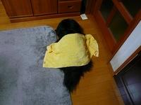 TAIZO20090131.jpg