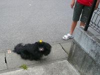 TAIZO20090504.jpg