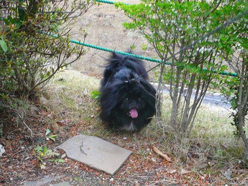 TAIZO20080426.jpg