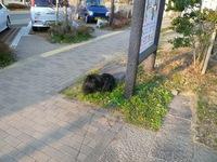 TAIZO20090201.jpg