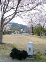 TAIZO20090405.jpg